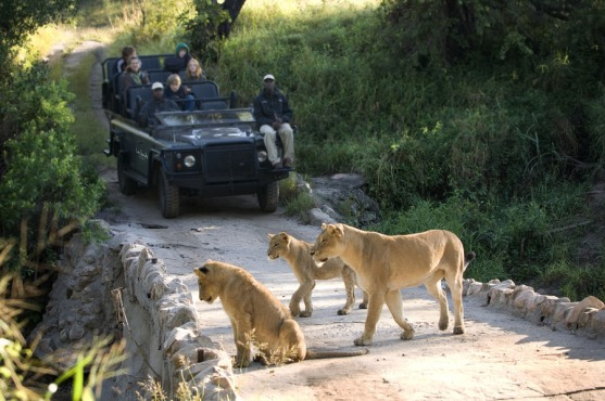 med-safarilionsgamedrive-050625